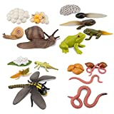 TOYMANY 17PCS Life Cycle of Frog Snail Earthworm Dragonfly, Egg Tadpole to Frog Safariology Amphibian Figurines Toy Kit, Plastic Forest Animal Figures Educational School Project for Kids
