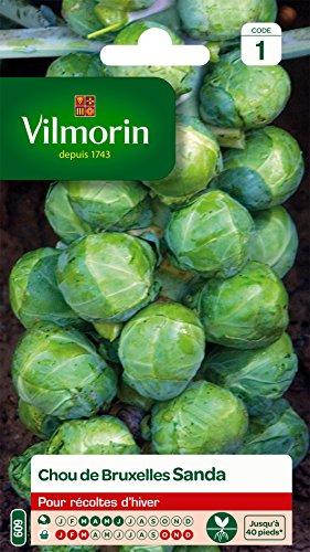 Vilmorin 3604041 Laitue Vert 90 x 2 x 140 cm