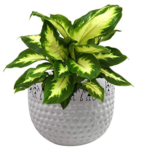 India Meets India Handicraft Ceramic Flower Pots/Ceramic Planter/Plant Pots/Indoor Outdoor Planter, Best for Gifting, Made by Awarded/Certified Indian Artisan