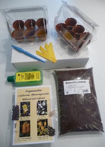 TROPICA - Set Tropenzauber mit Samen vom Orchideenbaum, Orangen-Jasmin, Schmetterlingsblume, Kassie