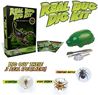 Discover with Dr. Cool Real Bug Digging Kit - Excavate 3 Genuine Specimens!
