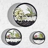 Juego de 3 macetas redondas para colgar en la pared, de metal, con forma de círculo, con forma de círculo, de hierro, decoración de pared, para plantas de aire, plantas de imitación (negro)