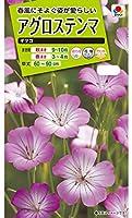 【種子】アグロステンマ ギタゴ タキイ種苗のタネ