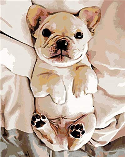 5D Diamond Painting Kits for Adults & Kids Cute French Bulldog in Bed Round Rhinestone Embroidery Cross Stitch Arts Craft Canvas Wall Decor 15.7Inch19.7Inch