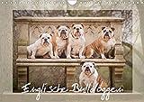 Englische Bulldoggen (Wandkalender 2021 DIN A4 quer)