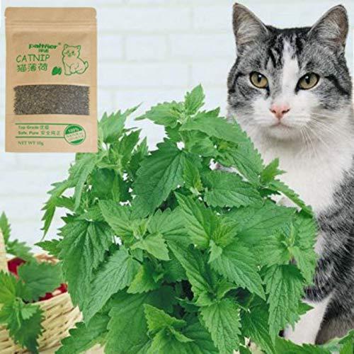 Etophigh Natürliche Hochwertige Katzenminze, Katzensnacks-Minzenkräuter, Minzenaroma-Spaßkatze liefert Katzengras