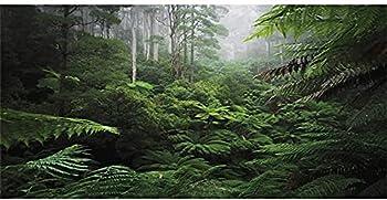 Best rain forest background Reviews