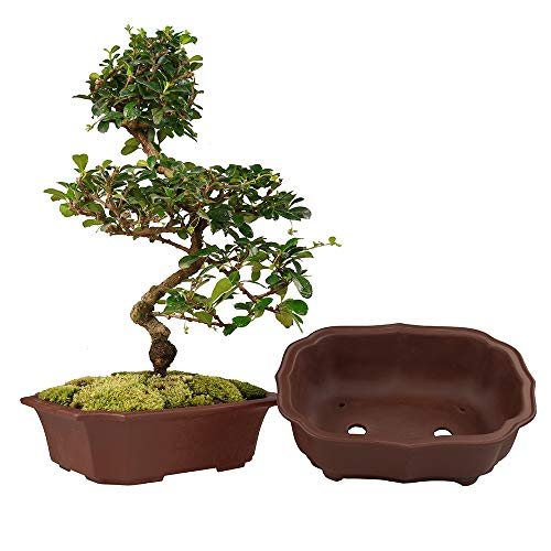 MUZHI 2 Pack Handmade Zisha Bonsai Planter Pot 8 Inch with Drip Tray, Breathable Unglazed Rectangle Yixing Ceramic Pot for Tree Succulent Cactus Brown