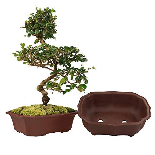 MUZHI 2 Pack Handmade Zisha Bonsai Planter Pot 8 Inch with Drip Tray, Breathable Unglazed Rectangle Yixing Ceramic Pot for Tree Succulent Cactus Brown