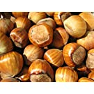 In Shell Filberts (Hazelnuts) - 5 lb.