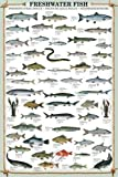 Educational Freshwater Fish - Süsswasserfische Bildung Lernposter Druck