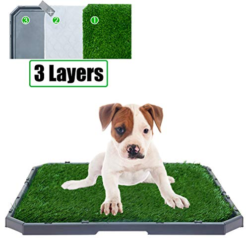 How to Potty Train a Dog on Pee Pads