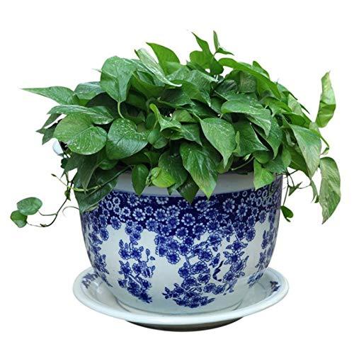 Qp-hp Céramiques en Porcelaine Bleue et Blanche Jingdezhen Pots à Fleurs et Fleurs avec châssis diverses spécifications bonsaï (MODÈLE : D, Taille : M)