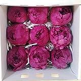 Flores Frescas Online Peonias Preservadas Medianas Purple 9 Unidades Portes Gratis