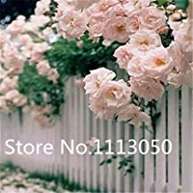 1 : Sale! 200Pcs 10 Kinds Bonsai Polyantha Rose Seeds Organic Blooming Flower Seeds Garden Plant