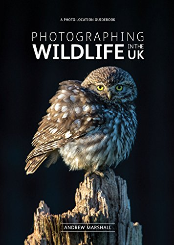 Photographing Wildlife in the UK - where and how to take great wildlife...