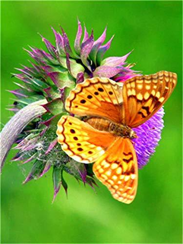 Pintar por Numeros Mariposa en árbol DIY Acrílica Pintura Kit para Adultos y Niños Principiantes - 16 * 20 Pulgadas con 3 Pinceles y Colores Brillantes Sin Marco