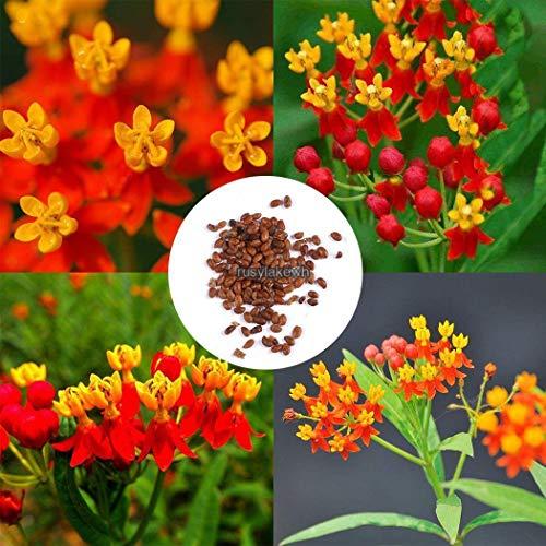 Go Garden 10pcs: Nouveau Belle adorable fleur odorante Blooms Marley Tendon Graines de fleurs Rlwh 02