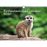 Erdmännchenzauber DIN A3 Kalender 2020 Erdmännchen - Seelenzauber