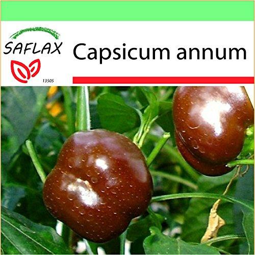 SAFLAX - Jardin dans la boîte - Paprika - Sweet Chocolate X - 10 graines - Capsicum annum