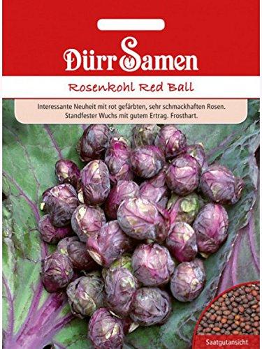 Rosenkohl Red Ball