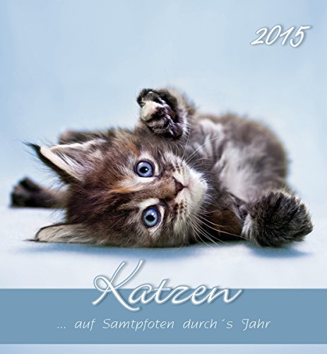 Katzen 2015 - Cats - Postkartenkalender (15 x 16)