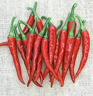 Vegetable Seeds - 20 Seeds of Ring of Fire Pepper - Cayenne Type