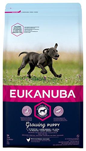 Eukanuba, Cibo Secco per Cani Cuccioli, Taglia Grossa, 1-12 Mesi, Croccantini Cane con Pollo, 3 Kg