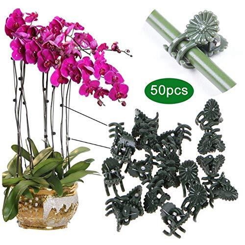 50 Stück Pflanzenclips Stabile Clips Pflanzenklammern, Gartenpflanze Clips wiederverwendbar für kleine & große Triebe Spaliere Rosenbögen Rankhilfen