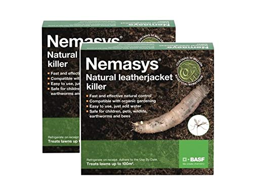 Nemasys Leatherjacket Killer nematode treatment (200 sqm)