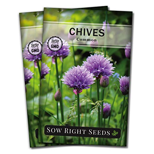 Sow Right Seeds - Chives Seed for Planting - Non-GMO Heirloom; Instructions to Plant and Grow Kitchen Herb Garden, Indoor or Outdoor; Great Garden Gift (2)
