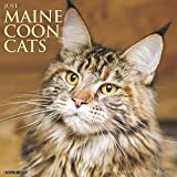 JUST MAINE COON CATS 2020 WALL
