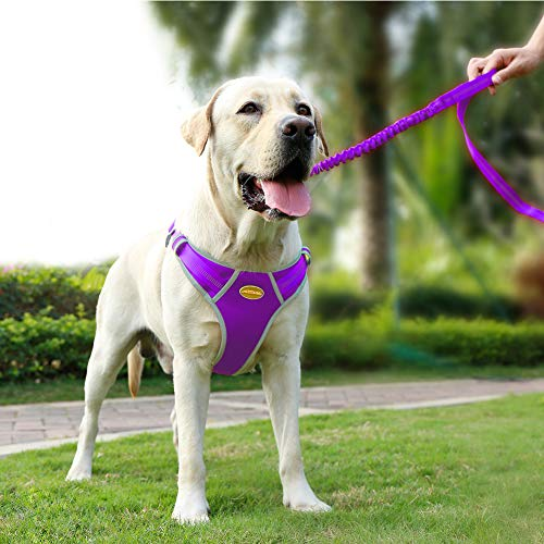 AdventureMore Dog Harness Leash Set, Step-in Escape Proof Reflective Dog Vest, No-Pull Adjustable Halter and Lead, with 5 ft Anti-Pull Dual-Handle Bungee Training Leash, Medium, Purple