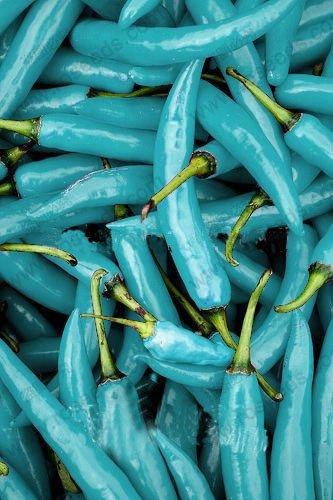 NICE Poivre Graines de légumes Graines de piments Bleu turquoise Turquoise Poivre Drop Shipping -100 pcs