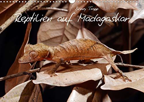 Reptilien auf Madagaskar (Wandkalender 2021 DIN A3 quer)