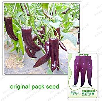 GEOPONICS 20 Samen/Pack, Gemüsesamen Chili, croints Chili Samen, lila Pfeffer, Pfeffer Hörner, nicht würzige Chili-Samen