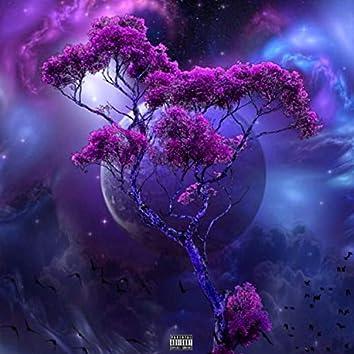 4D Universe