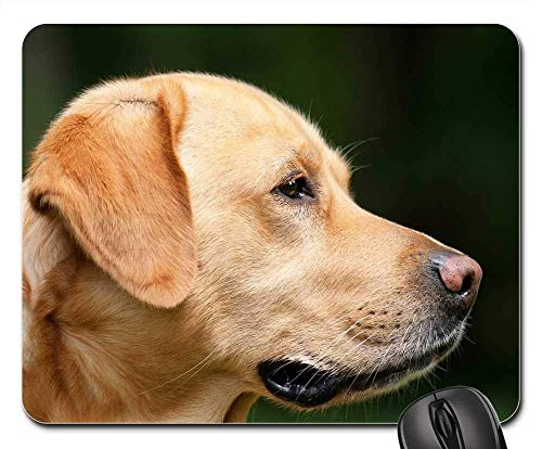 Yanteng Alfombrillas para Ratón - Perro Labrador Marrón Claro Mascota Hundeportrait