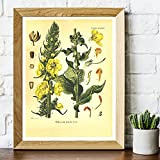 Vintage botanique imprime pavot velours plante fleur mur Art toile peinture 1887 plantes médicinales encyclopédie affiches, pour salon décor Pas de cadre (Size : (19.7x27.6inch)50x70cm unframed)
