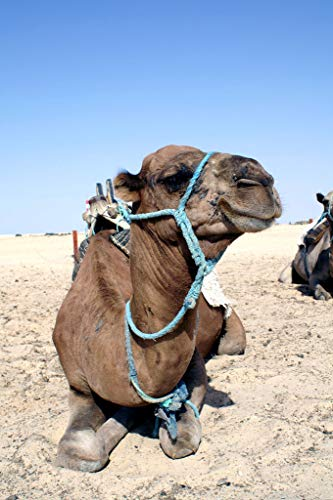 LTpintu Rompecabezas 1500 Piezas para Niños Adultos Camello En El Sofá El Regalo De Juego Intelectual Más Popular para Las Ideas De Navidad Y Halloween 87x57cm