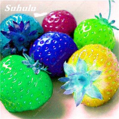 Big Promotion! 1000 Pcs Four Seasons en pot Graines Strawberry Super Sweet Seeds fruits Bonsai plantes Semences Maison et Jardin 8