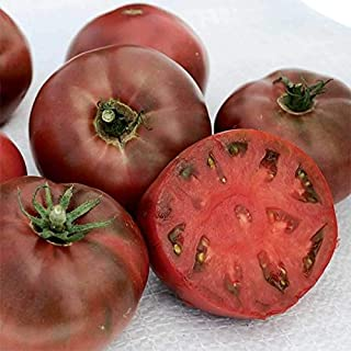 Carbon Tomato Seeds - 10+ Rare Non-GMO Organic Heirloom Purple Tomato Seeds in FROZEN SEED CAPSULES for The Gardener & Rare Seeds Collector - Plant Seeds Now or Save Seeds for Years