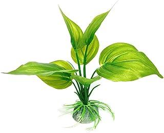Amazon.es: planta viva: Belleza