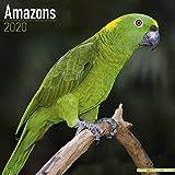 Amazon Parrot Calendar - Parrot Calendar - Bird Calendars - Calendars 2019 - 2020 Wall Calendars - Monthly Wall Calendar by Avonside