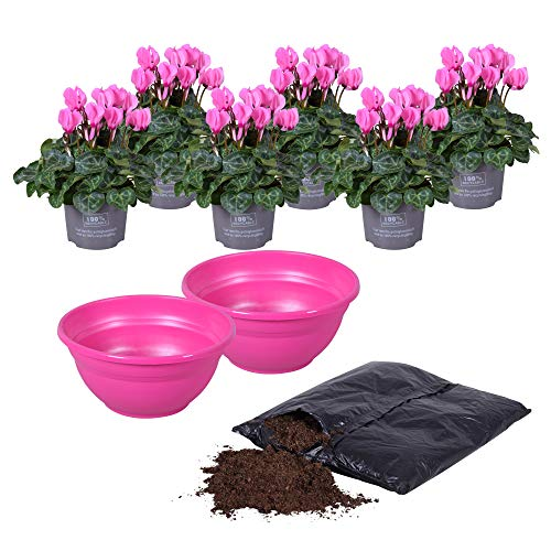 MoreLIPS® - Alpenveilchen DIY-Balkon-Pflanzset - inklusive 2X Pflanzschale pink Ø 27cm - 6X Alpenveilchen - Pflanzerde - Höhe 25-30 cm - Topfdurchmesser: 10,5 cm - Cyclamen - Your Green Present