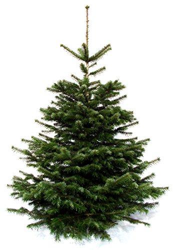 Echter Weihnachtsbaum Nordmanntanne 1,70 bis 1,90m aus dem Sauerland, frisch geschlagen, Premiumqualität