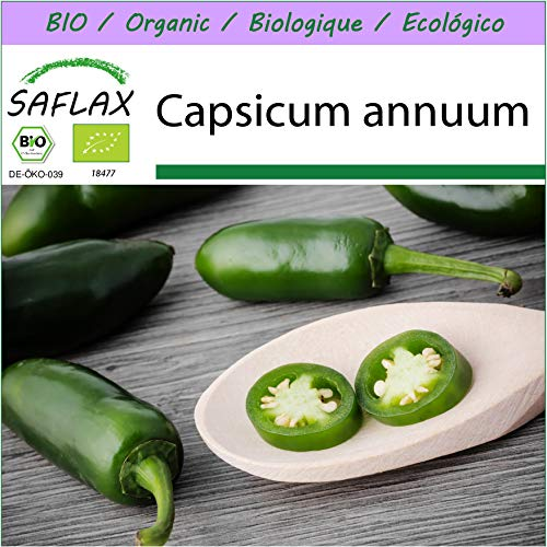 SAFLAX - BIO - Chili - Early Jalapeno - 20 Samen - Capsicum annuum