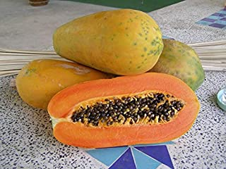 HOT!! - 15 Seeds Red Lady Papaya Seed, Very Sweet Flesh 100% Original