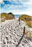 Wallario Poster - Möwen auf dem Weg zum Strand in