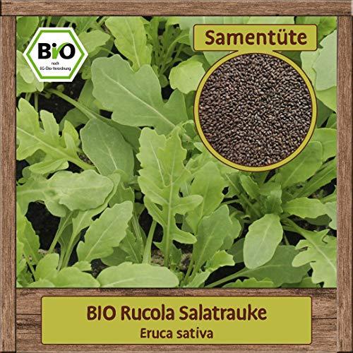 BIO Rucola Samen Salat Saat (Eruca sativa) Kräutersamen Salatsamen Wilde Rauke